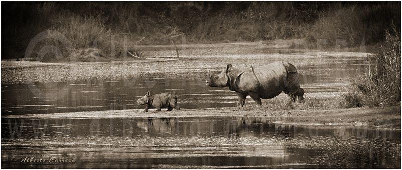 Lolkema Adventures Rhino Baby Bardia National Park Alberto Carrera