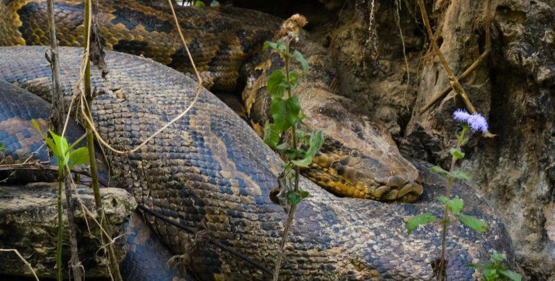 Lolkema Adventures Python Bardia Nepal